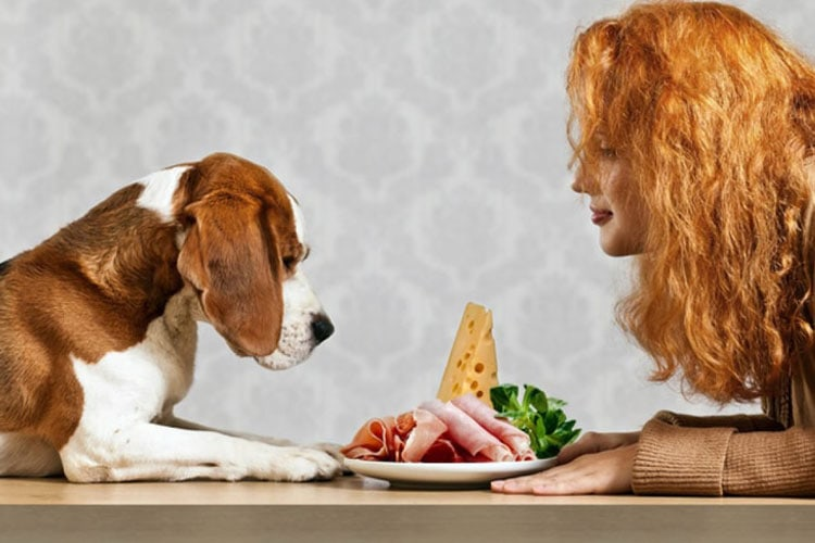 Ham Is Bad For Dogs