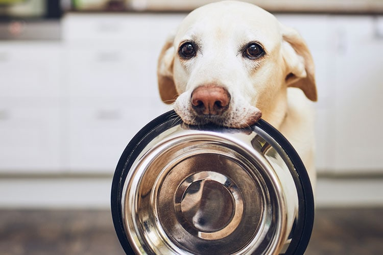 How Long Can A Dog Go Without Food and Water