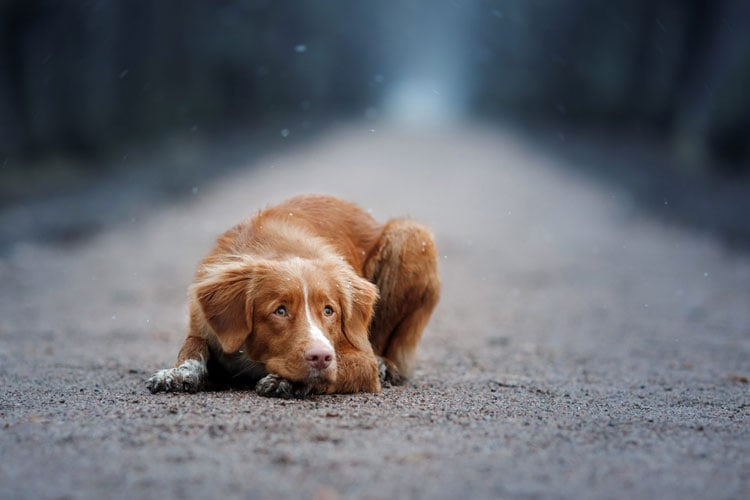 How Long Can A Dog Live Without Food