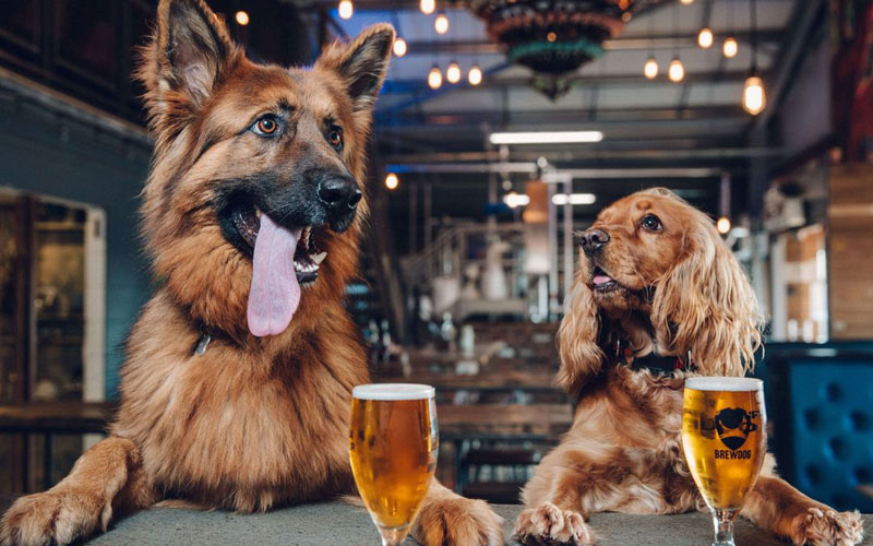Can Pets Drink Beer