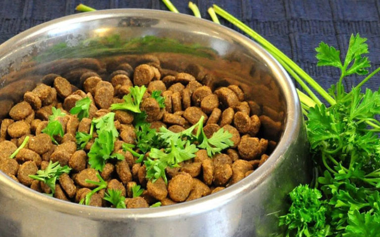 Can Dogs Eat Parsley