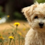 Top 100 Popular Dog Names 2018