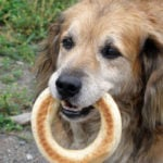 Can Dogs Eat Bagels