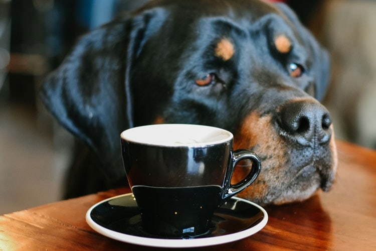 Coffee For Dogs