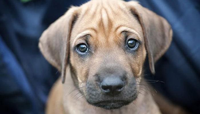 Do Dogs Cry Tears of Sadness