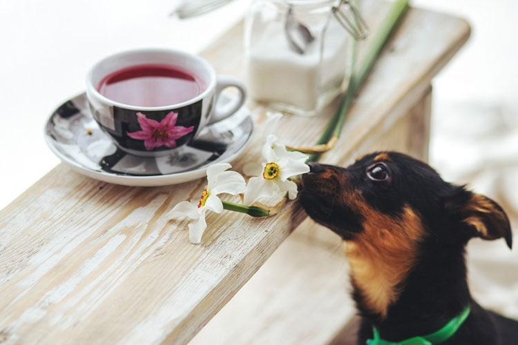 Dogs Drink Tea
