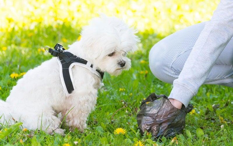 How Often Do Puppies Poop