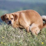 How Often Should A Dog Poop