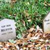 How To Bury A Dog