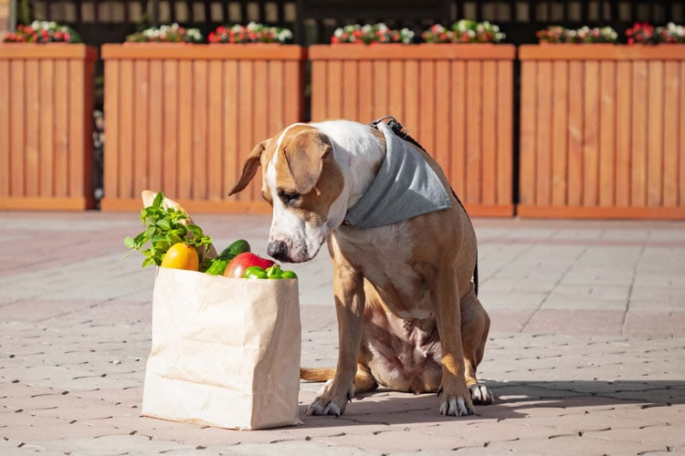 Dogs Can Eat Bok Choy