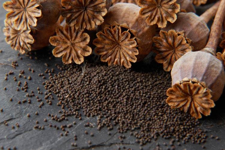 What To Do If Your Dog Eats Poppy Seeds