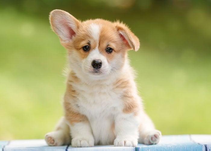 Puppy Supplies List
