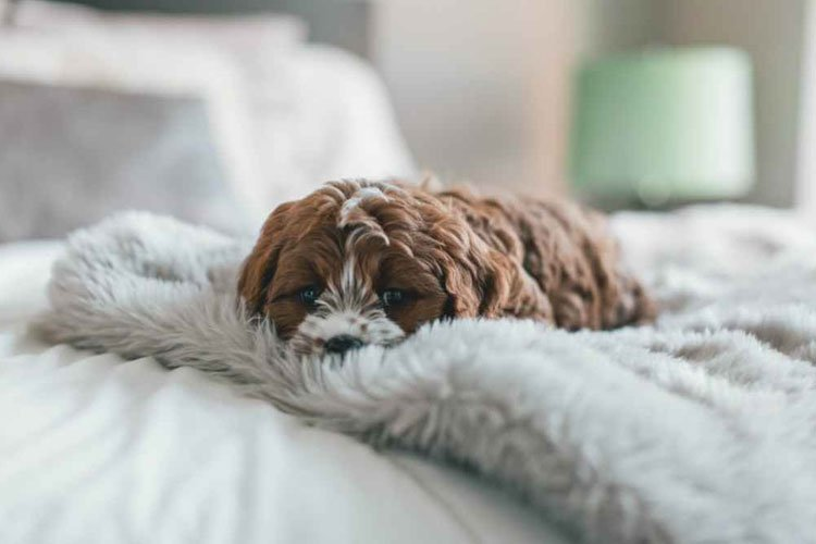 Pepcid Side Effects in Dogs