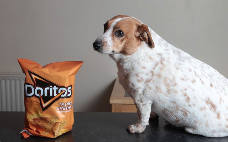 Are Doritos Bad For Dogs