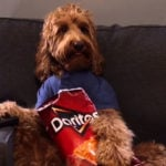 Can Dogs Eat Doritos