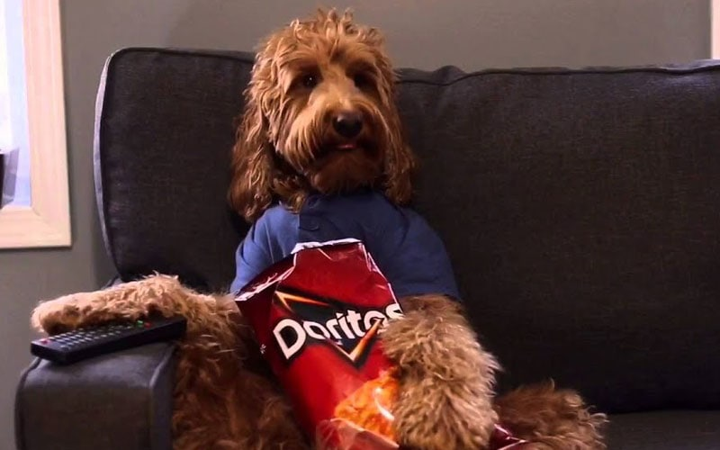 Can Dogs Eat Doritos