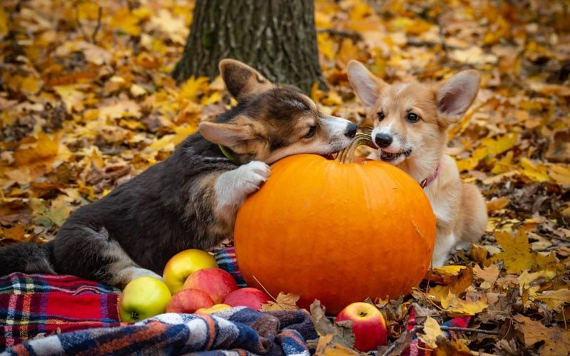 Can Dogs Eat Raw Pumpkin