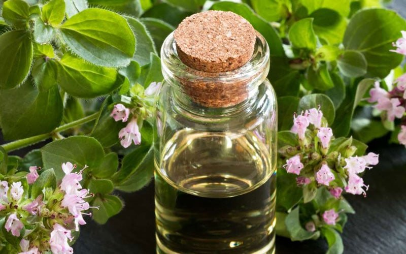 Is Oregano Oil Safe For Dogs
