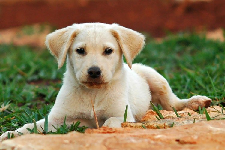 Can Caster Oil Be Used On Dogs
