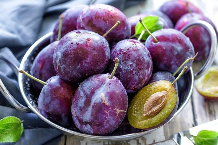Can Dogs Have Plums