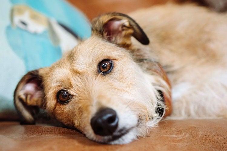 Castor Oil Dog Skin Allergies
