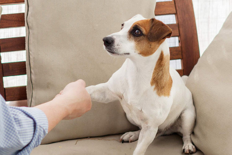 How to Keep Dog From Licking Wound