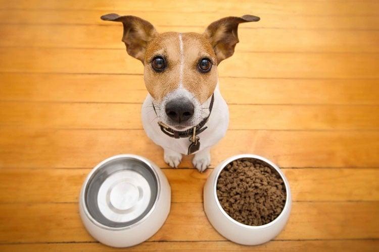 Sauerkraut For Dogs