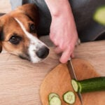 Dogs Can Eat Cucumbers