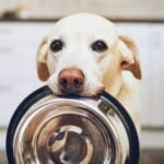 Foods Dogs Can and Can't Eat