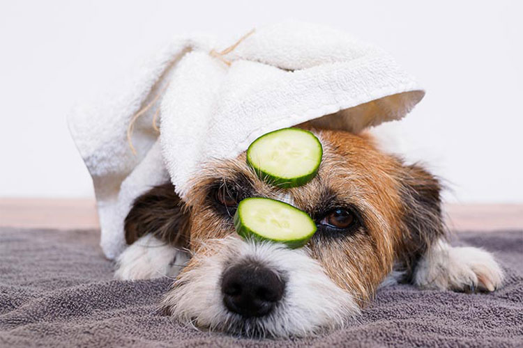 Pickles Are Bad For Dogs